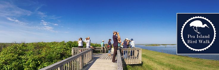 Pea Island Bird Tour